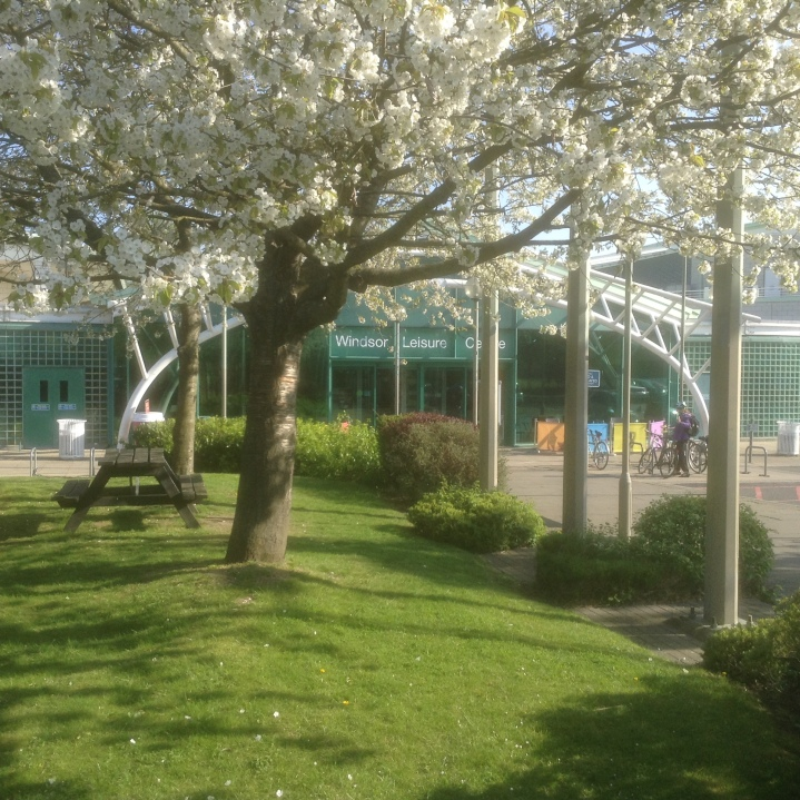 windsor leisure centre cherry blossom