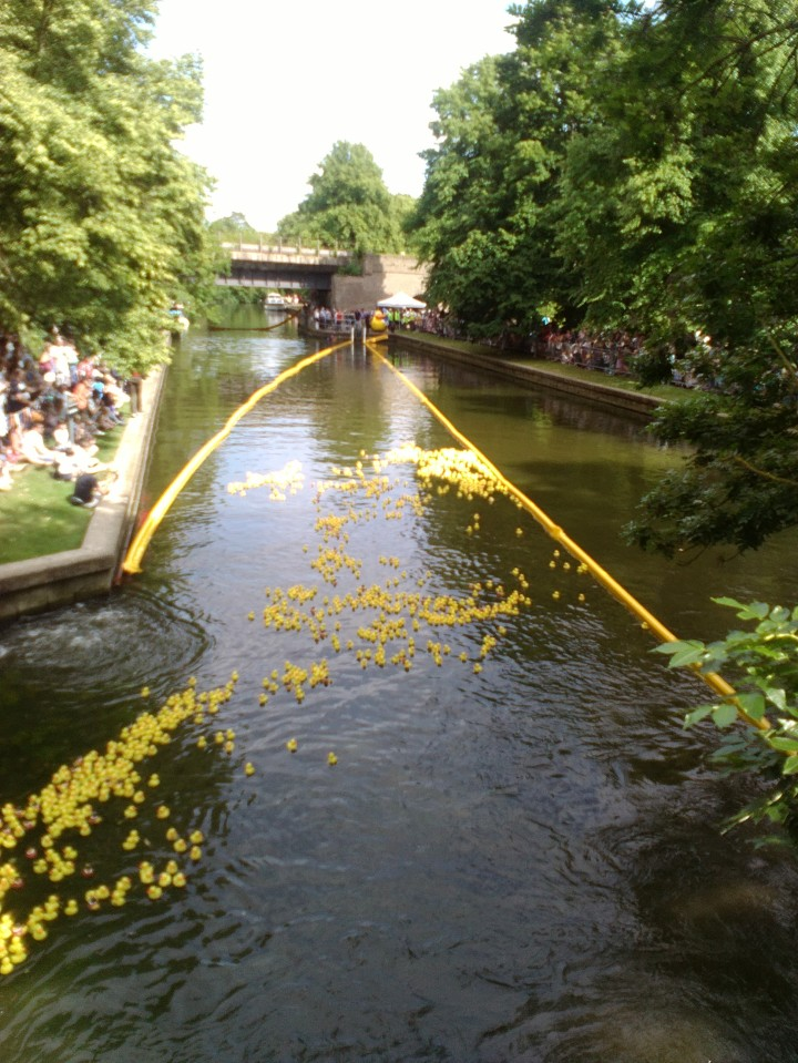 Duck Race Interact club 3