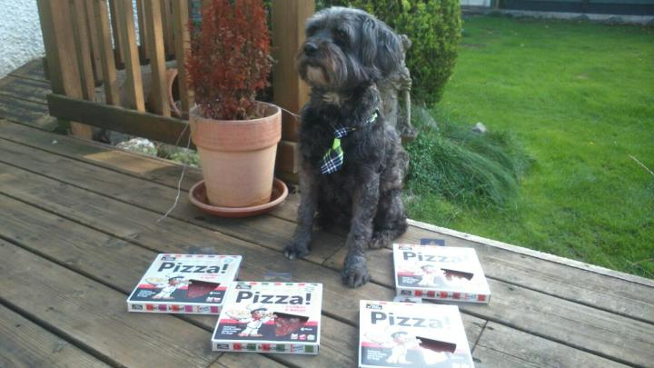 doggy pizza max dressed for dinner 3