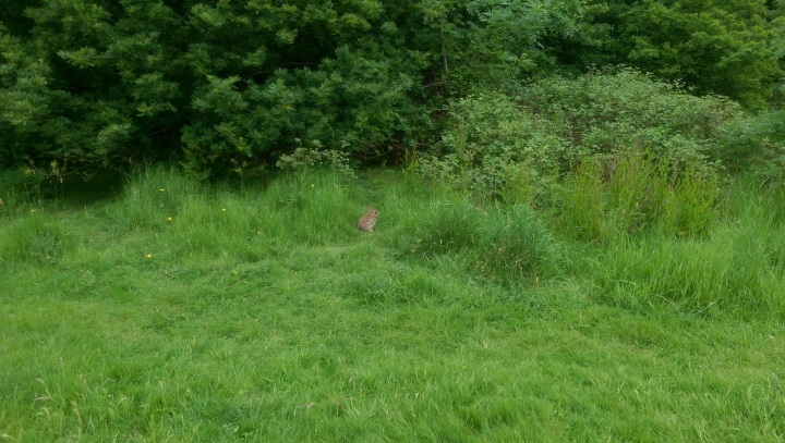 windsor great park bunny what about me