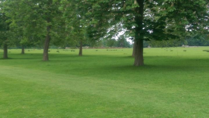 windsor great park deer main herd