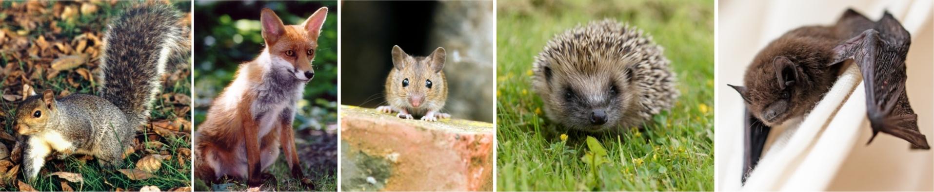 endangered mammal species