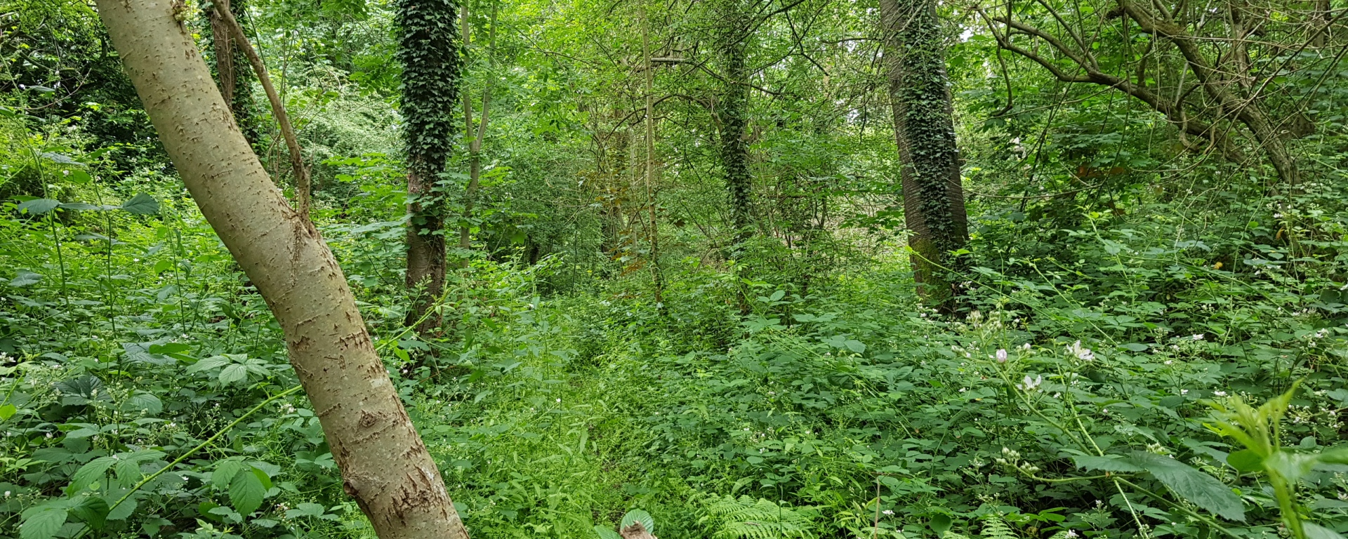 hemwood dell trees