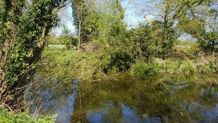 tree racecourse river