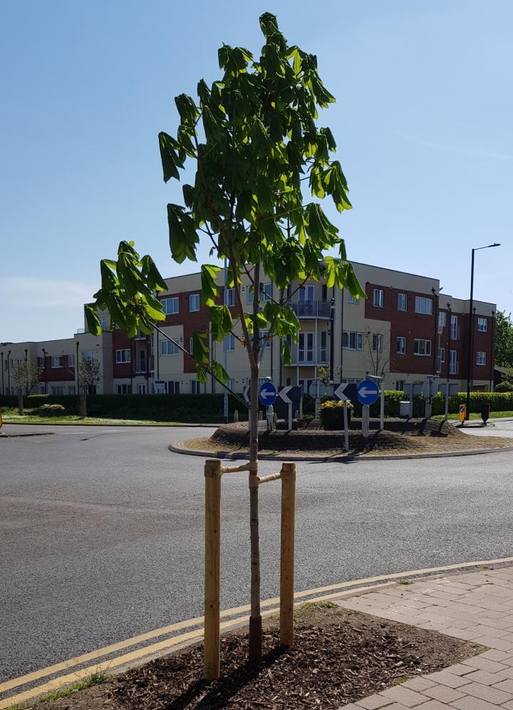 smiths lane tree